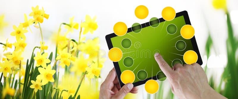 Giardinaggio e concetto di commercio elettronico dei fiori, acquisto online sulla compressa digitale, mano che indica e touch scr illustrazione vettoriale