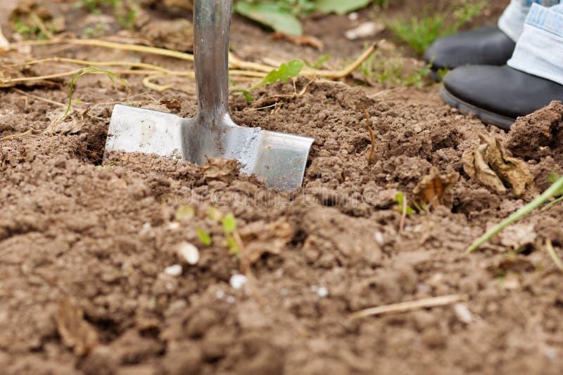 Giardinaggio - scavando sopra il terreno fotografie stock