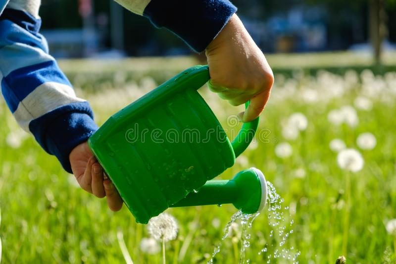 Giardinaggio verde del ragazzo del bambino della molla Acqua immagine stock
