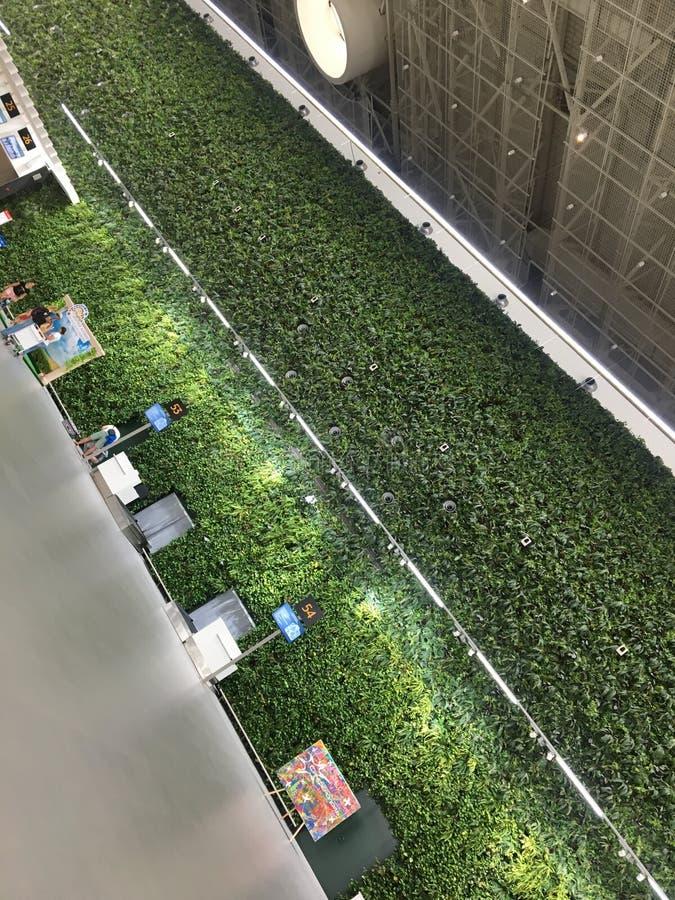 Giardinaggio verticale all'aeroporto, piante domestiche all'interno delle costruzioni, una parete delle foglie verdi Contatore di immagine stock