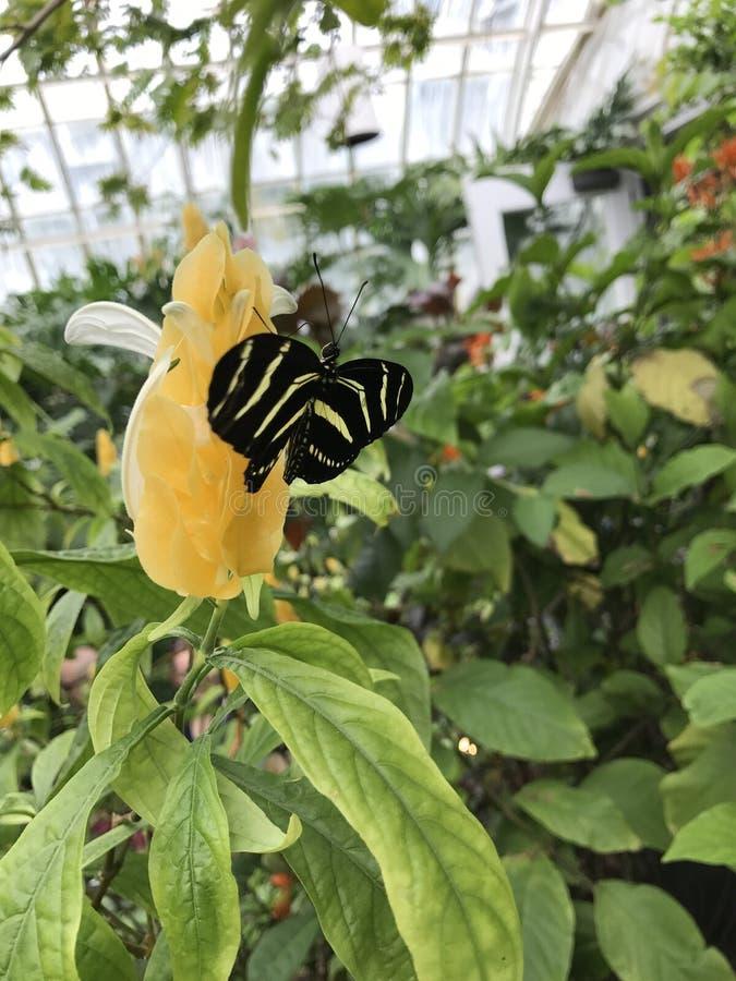 giardini fotografia stock libera da diritti