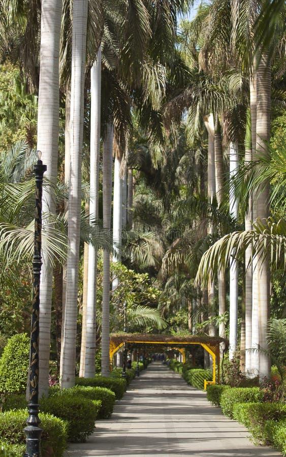 Giardini botanici a Aswan nell'Egitto immagini stock libere da diritti
