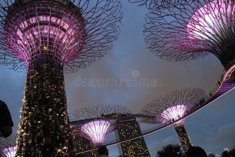 Giardini botanici dalla baia Singapore fotografia stock