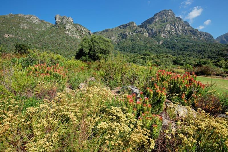 Giardini botanici di Kirstenbosch fotografie stock