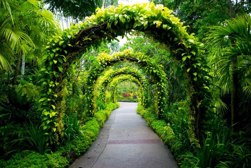 Giardini botanici di Singapore immagine stock