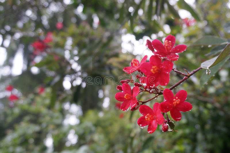 Giardini botanici reali, Peradeniya, Sri Lanka fotografia stock libera da diritti