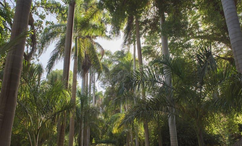 Giardini botanici tropicali a Assuan nell'Egitto fotografia stock libera da diritti