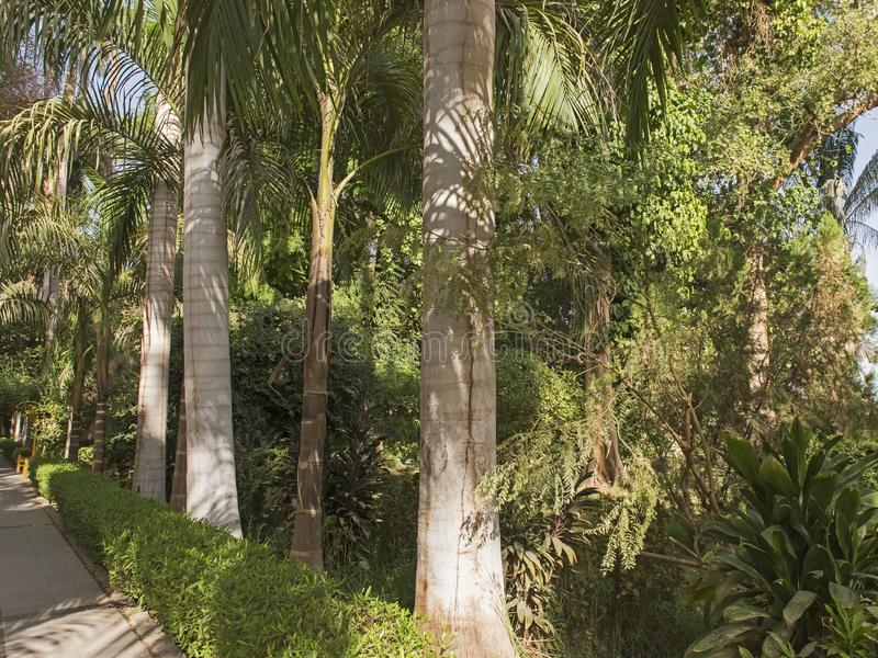 Giardini botanici tropicali a Assuan nell'Egitto fotografia stock