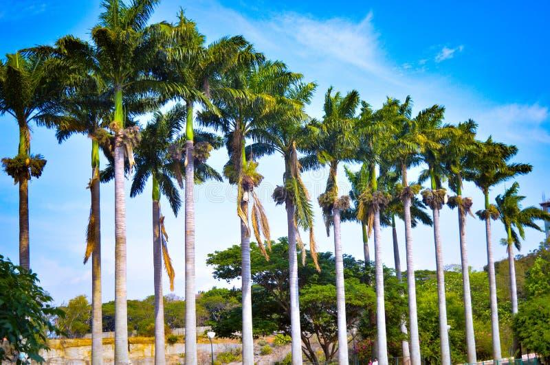 Giardini degli alberi immagine stock