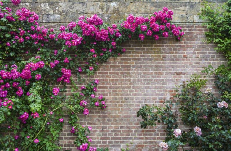 Giardini del castello di Hever fotografie stock libere da diritti