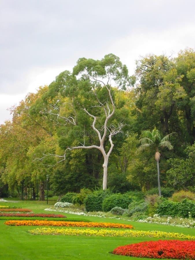 Download Giardini della città immagine stock. Immagine di tronco - 221113