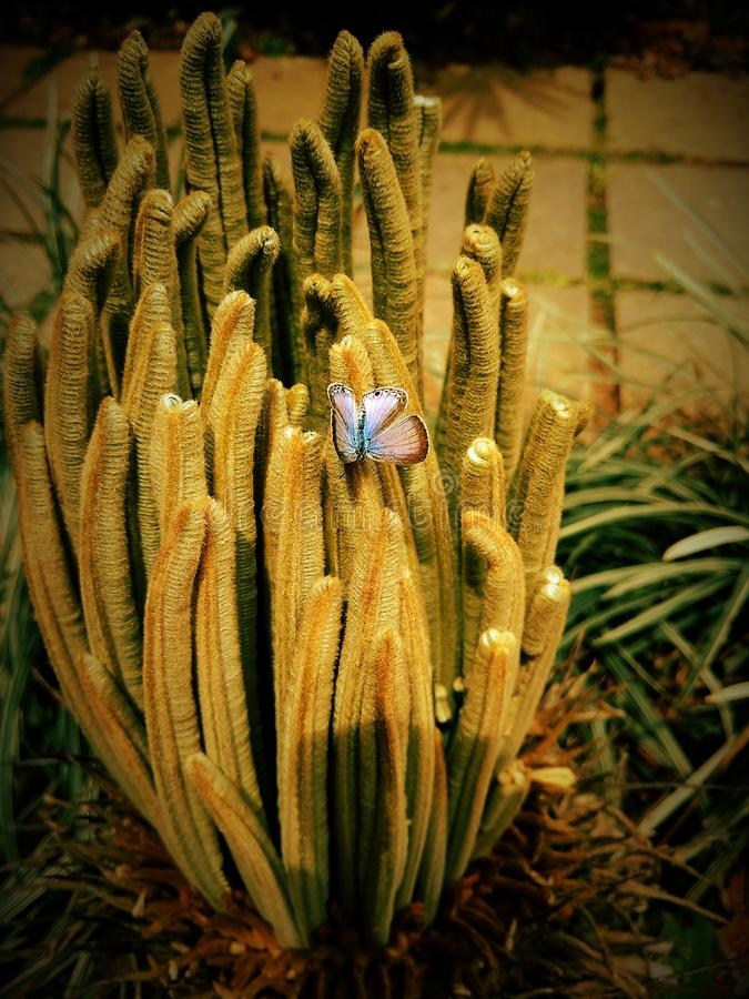 Giardini della natura dei fiori di farfalla fotografie stock libere da diritti