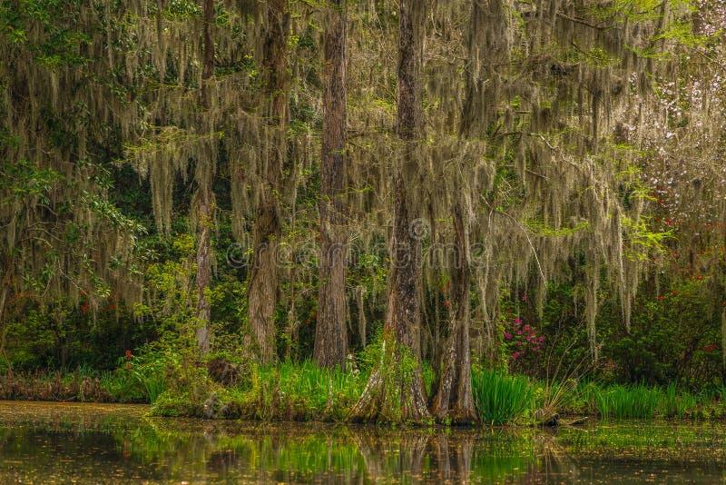 Giardini della piantagione della magnolia fotografia stock libera da diritti