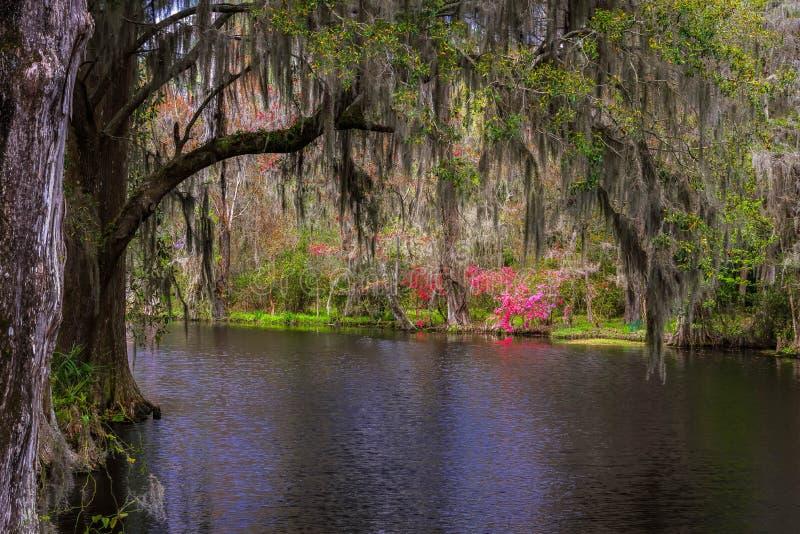 Giardini 2 della piantagione della magnolia fotografie stock