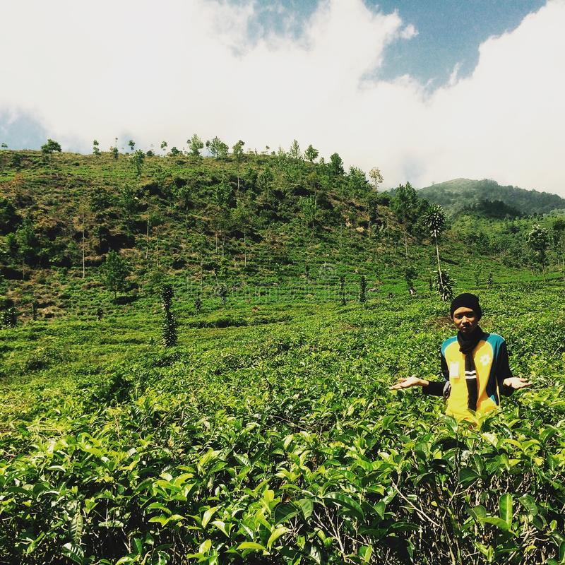 Giardini di tè fotografia stock libera da diritti