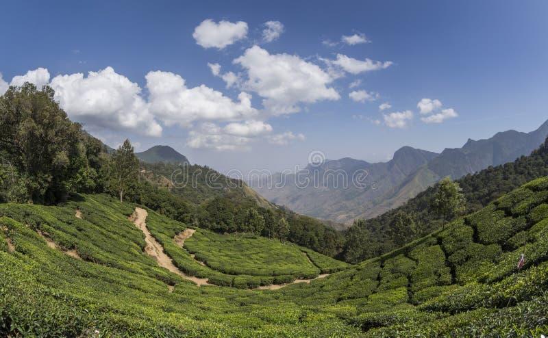 Giardini di tè in Munnar, Kerala, India immagini stock