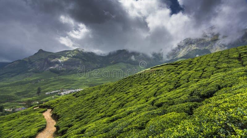 Giardini di tè in Munnar, Kerala, India fotografie stock libere da diritti