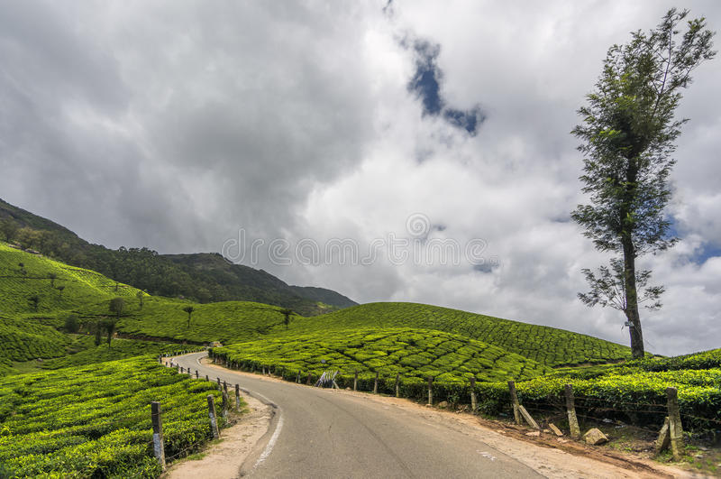 Giardini di tè in Munnar, Kerala, India immagini stock libere da diritti