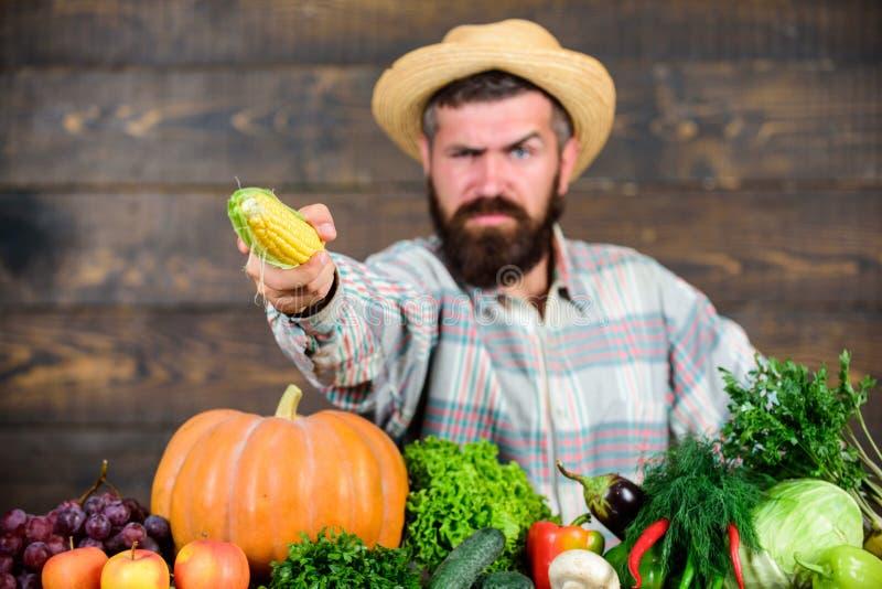 Giardini ed aziende agricole della Comunit? Stile di vita sano Alimento biologico nostrano Uomo con il fondo di legno della barba fotografia stock libera da diritti