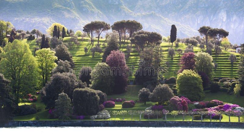 Giardini A Terrazze Sulla Riviera Del Lago Como Fotografia Stock ...
