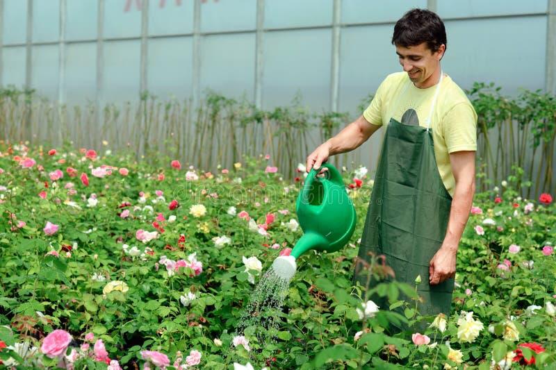 Giardiniere immagini stock