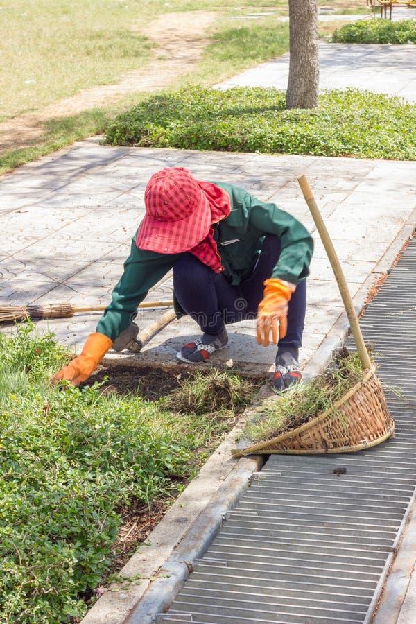 Giardiniere che estrae le erbacce in parco pubblico in Tailandia, moto bl fotografia stock