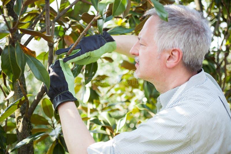Giardiniere che pensa per potare un albero fotografia stock libera da diritti