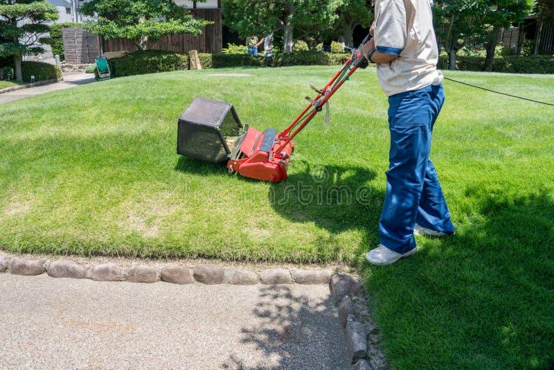 Giardiniere che taglia l'erba con la falciatrice da giardino fotografia stock