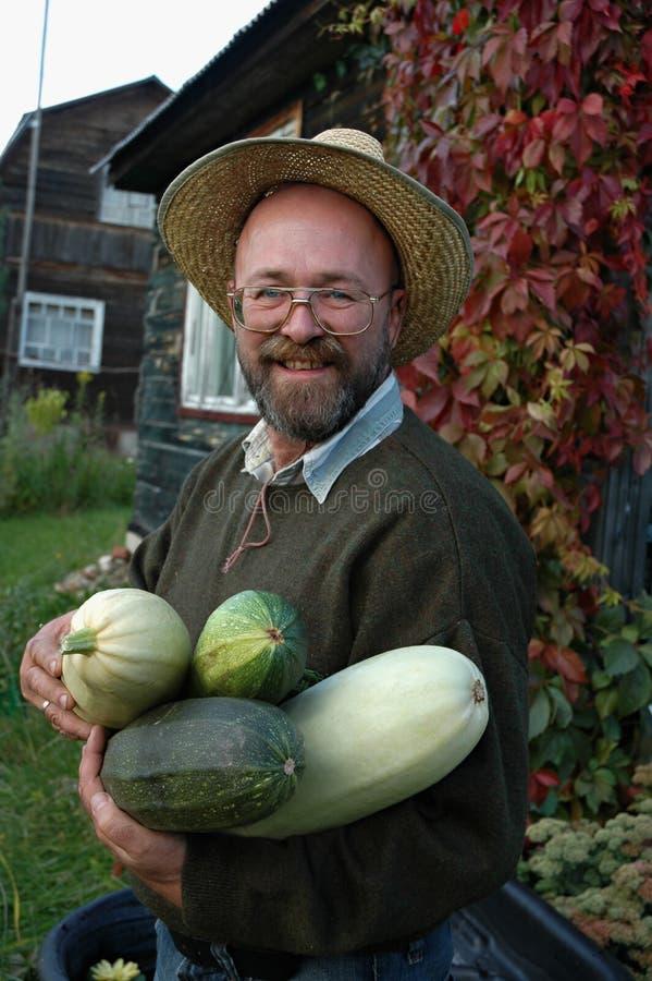 giardiniere che tiene i grandi zucchini fotografia stock
