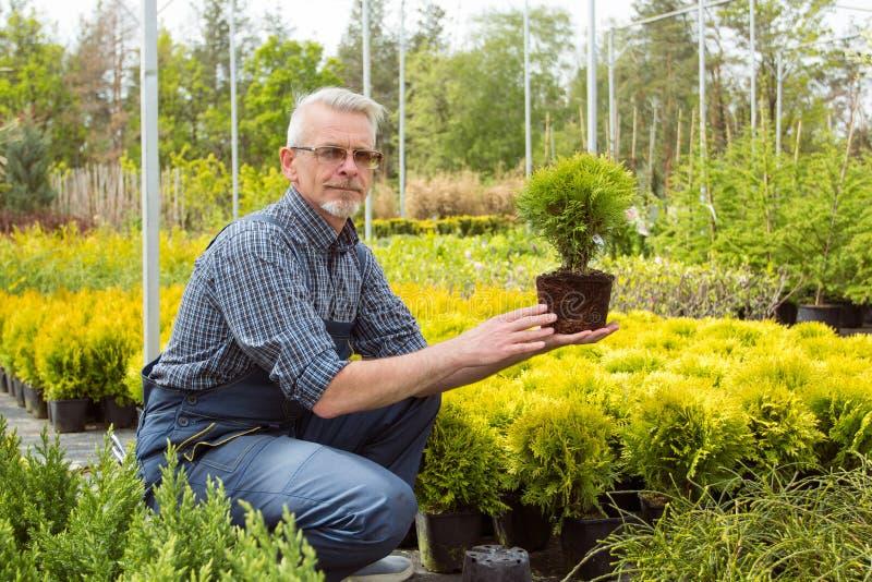 Giardiniere che tiene una piccola pianta della piantina nel mercato del giardino fotografie stock