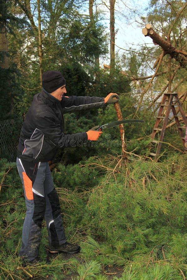 Giardiniere con la sega a mano - pulizia la strada dopo la tempesta immagini stock libere da diritti