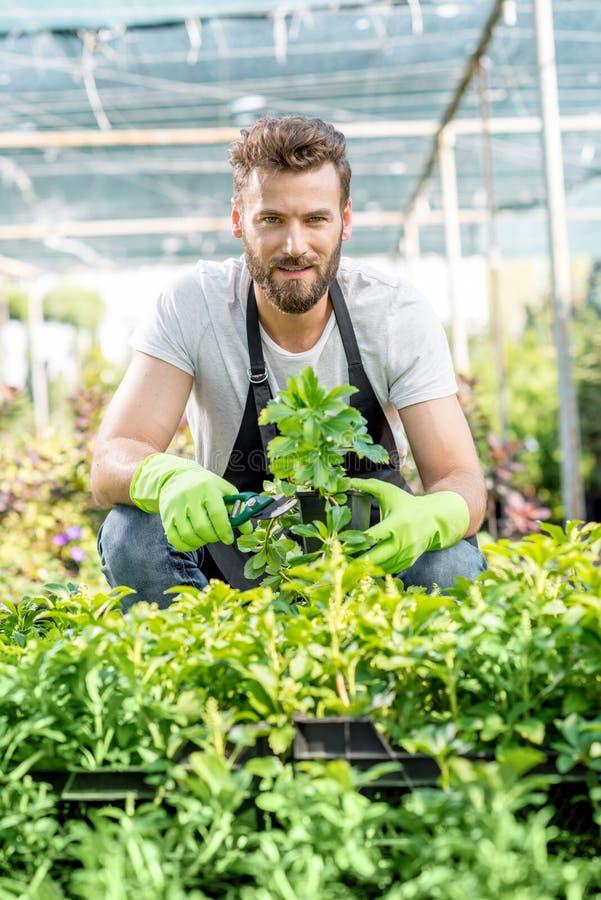 Giardiniere con piante verdi nel focolaio immagini stock