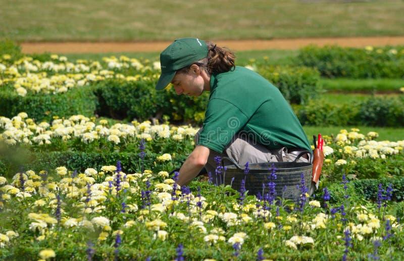 Giardiniere femminile che tende i fiori fotografia stock libera da diritti