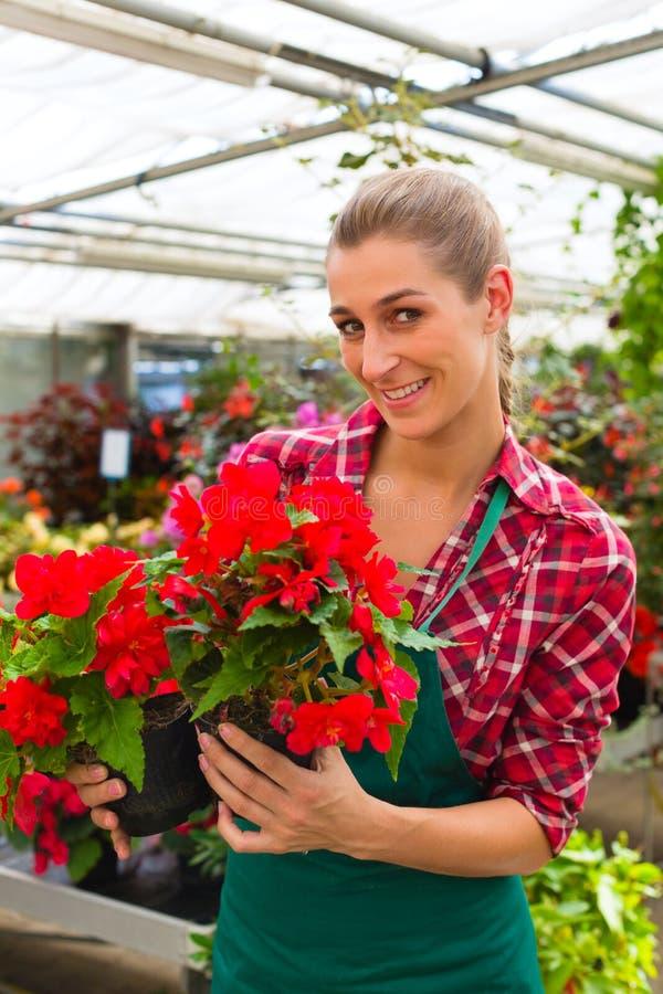 Giardiniere nel suo negozio di fiore della serra fotografia stock