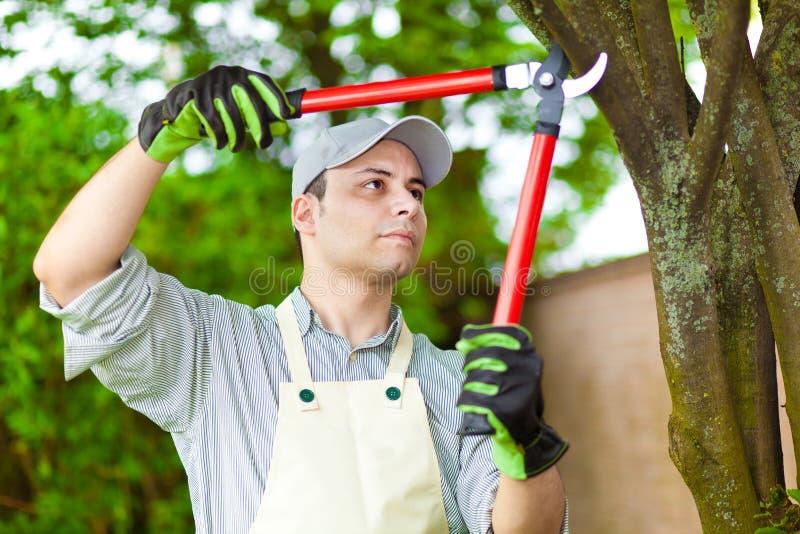 Giardiniere professionista che pota un albero immagine stock
