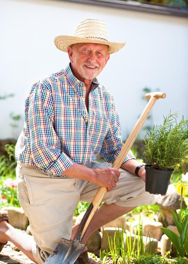 Giardiniere senior con una vanga immagine stock libera da diritti