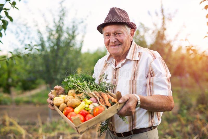 Giardiniere senior con verdure raccolte immagine stock