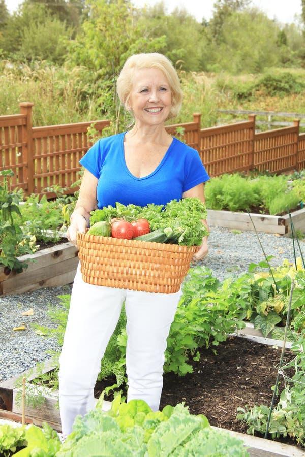 Giardiniere senior di signora fotografia stock libera da diritti
