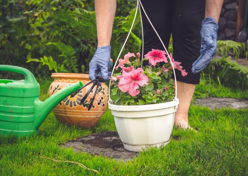 Giardiniere sul lavoro Trapiantando nei vasi d'attaccatura immagini stock