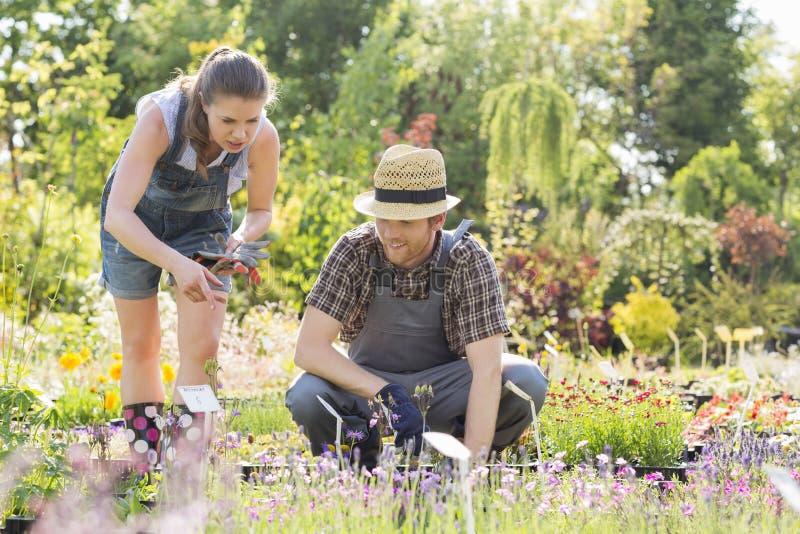 Giardinieri che discutono alla scuola materna della pianta fotografia stock