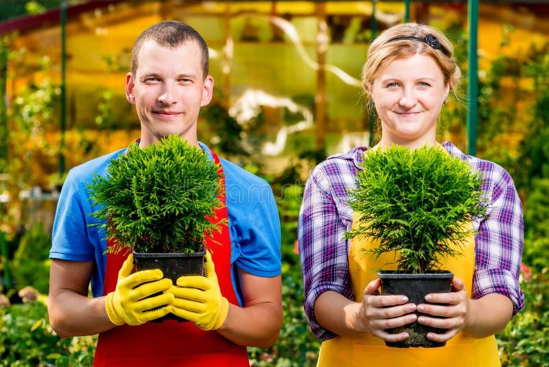 Giardinieri con esperienza con le piantine nei vasi fotografia stock libera da diritti