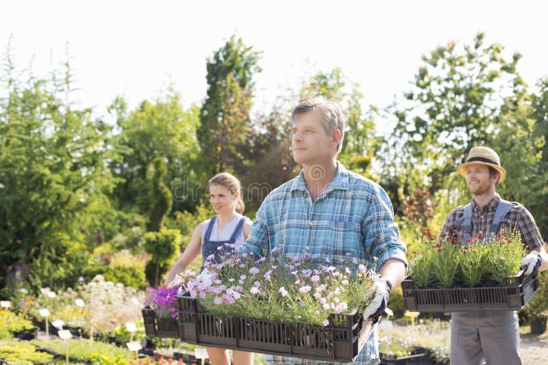 Giardinieri maschii e femminili che portano le casse con i vasi da fiori alla scuola materna della pianta fotografie stock