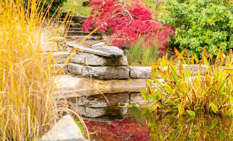Giardino Autunno colore Acqua piante immagine stock