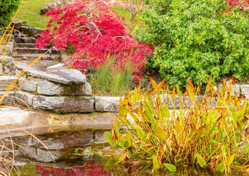 Giardino Autunno colore piante Acqua immagine stock libera da diritti