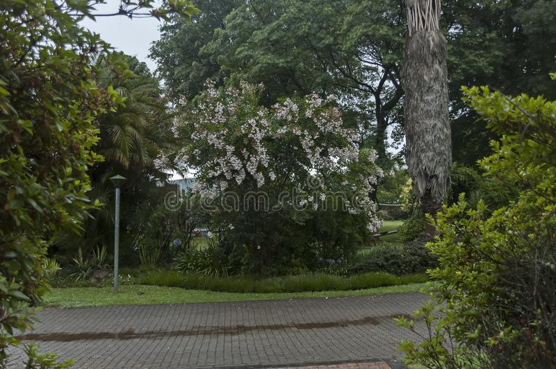 Giardino bagnato di mattina dopo la notte piovosa in Sabie fotografie stock libere da diritti