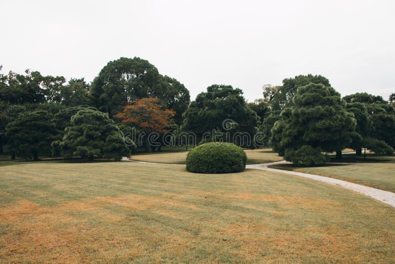 Giardino botanico con un bello stagno a Kyoto fotografie stock