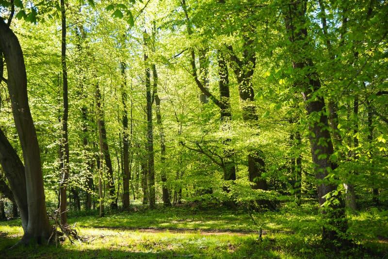 Giardino botanico di Meise fotografia stock