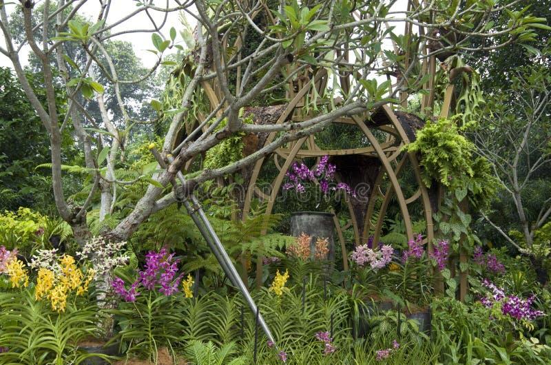 Giardino botanico di Singapore del giardino dell'orchidea fotografie stock libere da diritti