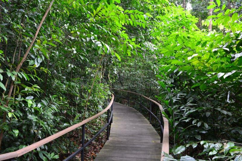 Giardino botanico di Singapore, un centro di eredità dell'Unesco fotografie stock libere da diritti