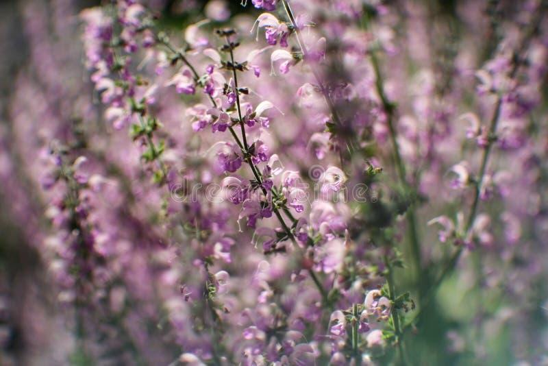 Giardino botanico, piano, fondo, bello, fioritura, colore, campo, flora, fiore, natura, molla, estate, estate, immagini stock